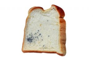 カビが生えた食パン