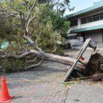 強風被害・倒木