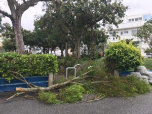 最大風速50メートル・樹木が倒れる