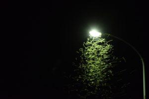 虫はなぜ光に集まるのか?