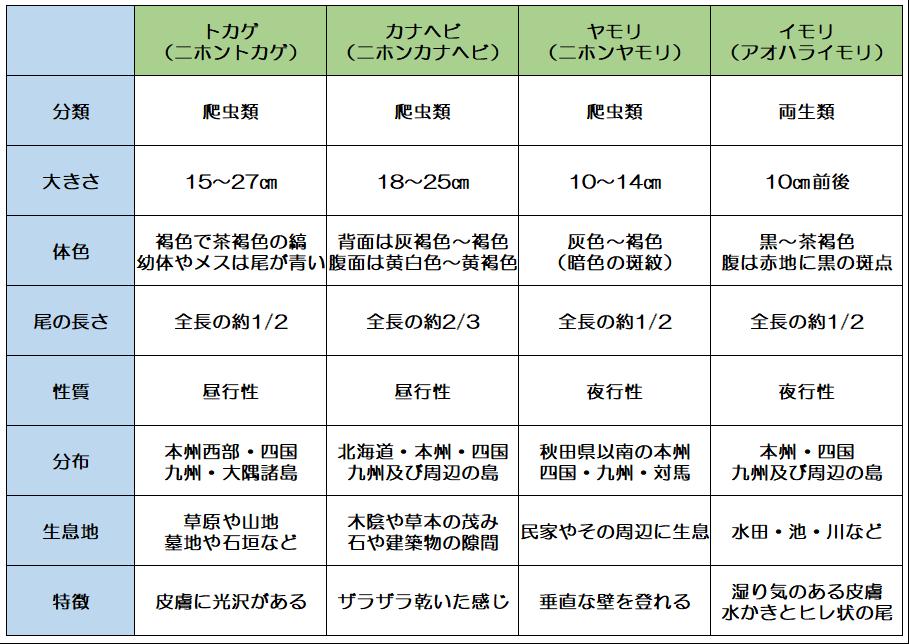 トカゲ・カナヘビ・ヤモリ・イモリの違い比較表
