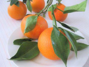 橙(だいだい)